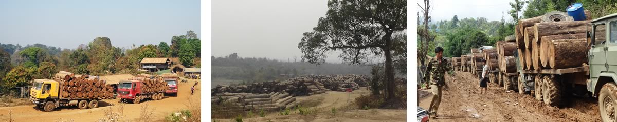 Burma deforestation problem