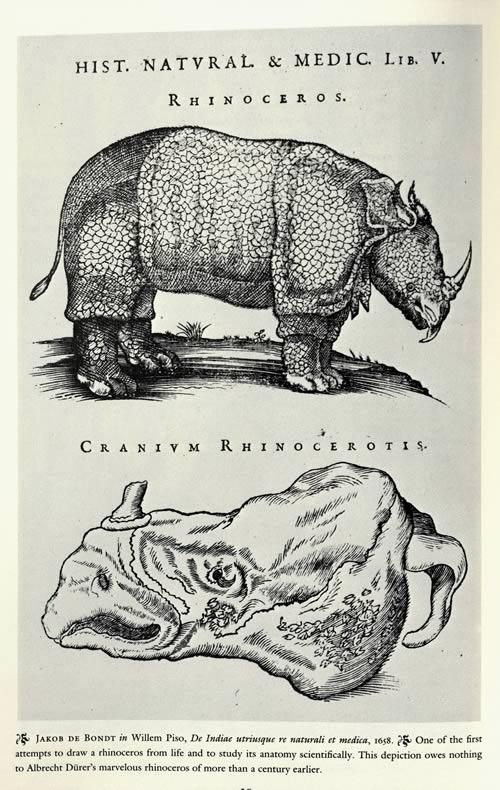 Jakob de Bondt - Rhinocerot