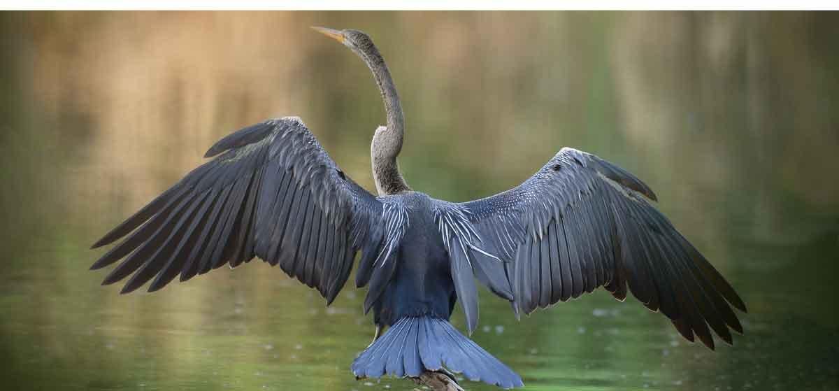 Birdlife Mekong River: Experiencing Vietnam River Cruise Adventure
