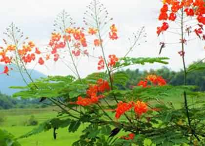 The flowers of Yunnan: in the land of the plant hunters