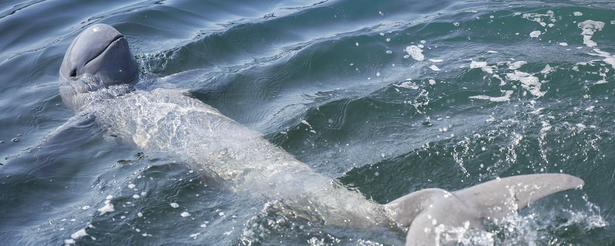 Pandaw Irrawaddy Dolphin 2