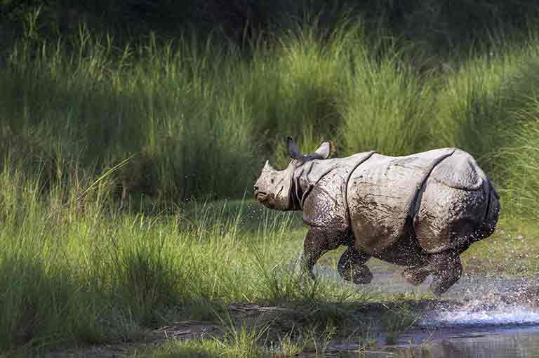 Kaziranga National Park River Cruises