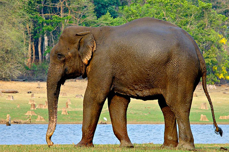 Nagarhole National Park River Cruises